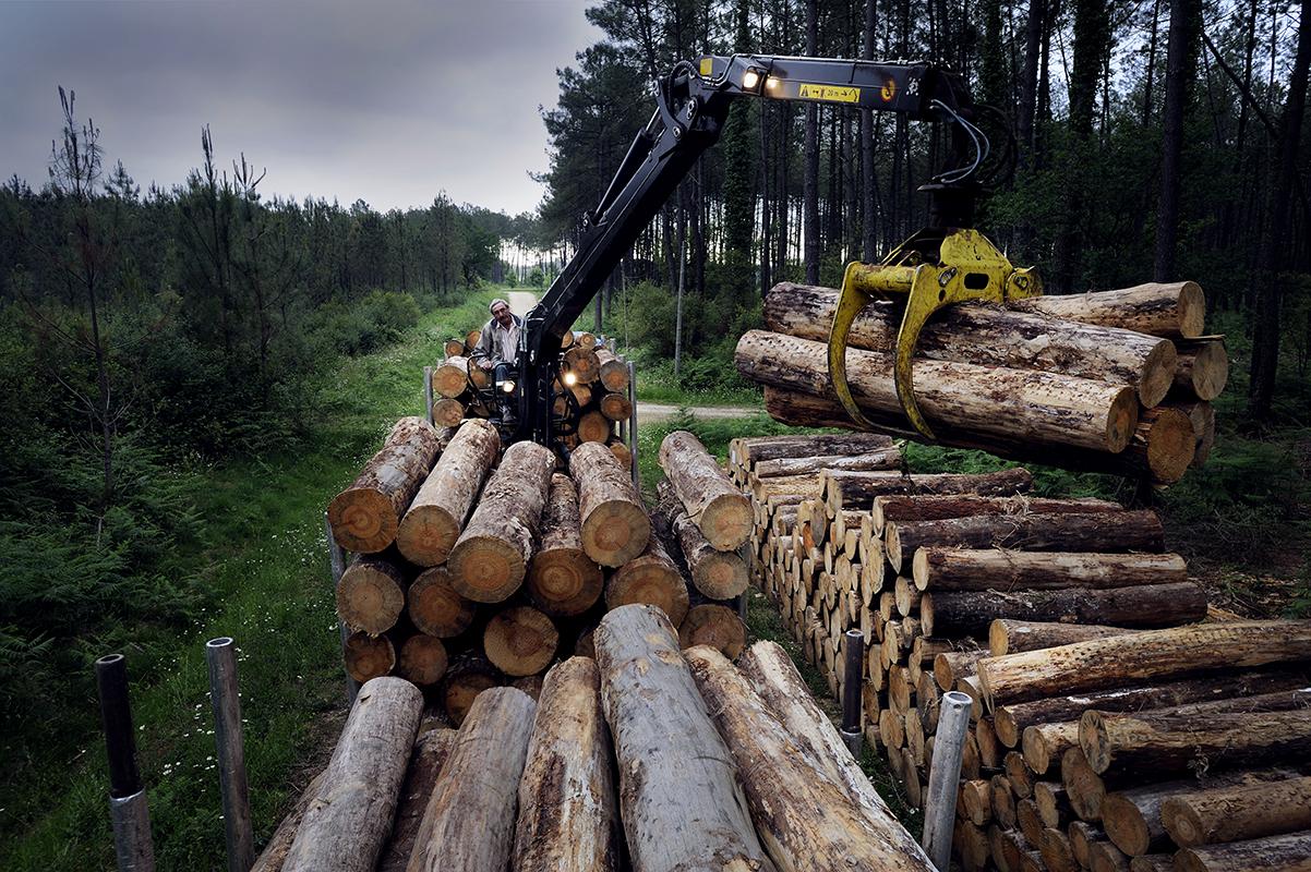 bourcier photographe camion transport grumes bois renault trucks 08 ~ Transport Grumes Bois