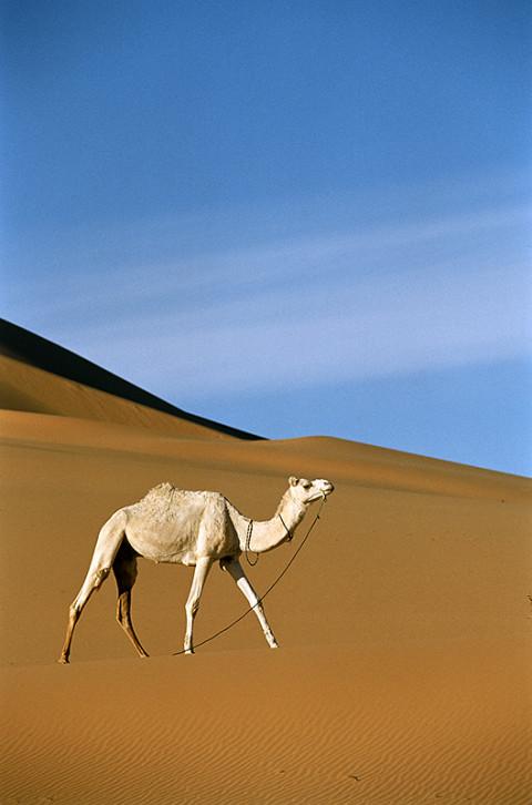 fred bourcier photographe reportage desert libye 07