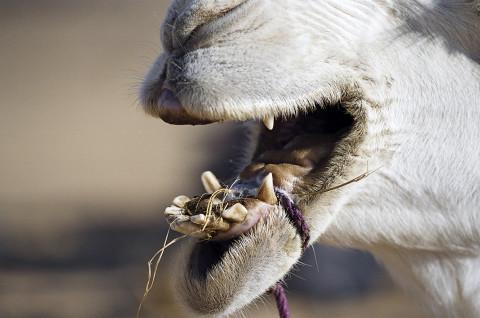 fred bourcier photographe reportage desert libye 11