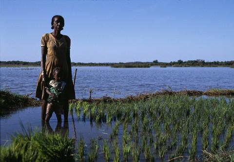 fred bourcier photographe reportage madagascar culture riz femme enfants