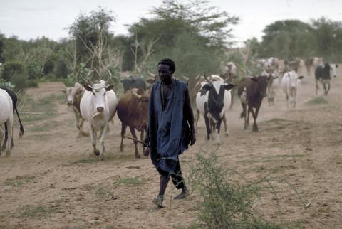 fred bourcier photographe reportage mali tombouctou 03