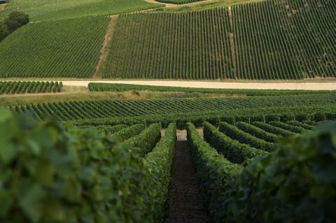 reportage viticole par fred bourcier photographe