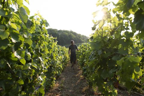 photo d'un viticulteur des champagnes Legret travaillant dans ses vignes