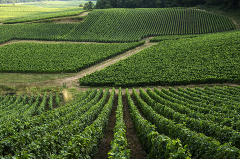 fred-bourcier-photographe-reportage-champagne-legret-travail-vignes-bio-06