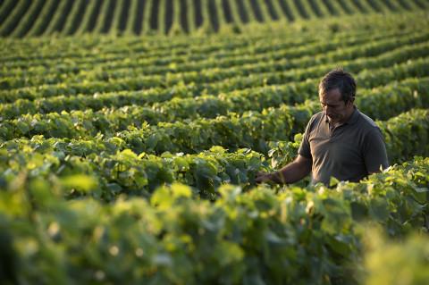 photo fred bourcier d'un viticulteur de la maison Legret dans ses vignes au coucher de soleil
