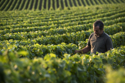 fred-bourcier-photographe-reportage-champagne-legret-travail-vignes-bio-07