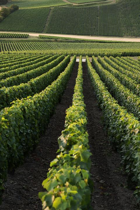 fred-bourcier-photographe-reportage-champagne-legret-travail-vignes-bio-17