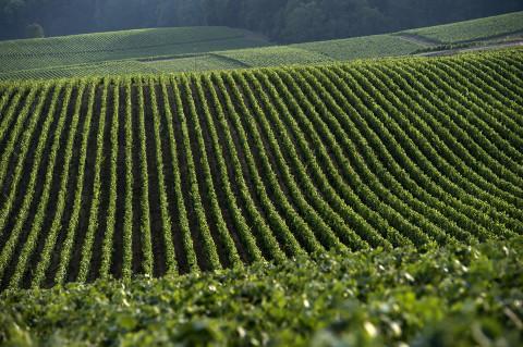reportage viticole champagne Legret