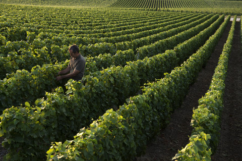 photo viticulteur champagne Legret reportage fred bourcier