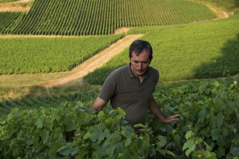 reportage viticole champagne Legret vigne photo fred bourcier