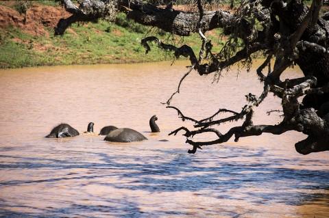 reportage photos fred bourcier dans parc national Sri lanka maman et bebe elephant se baignant dans rivière